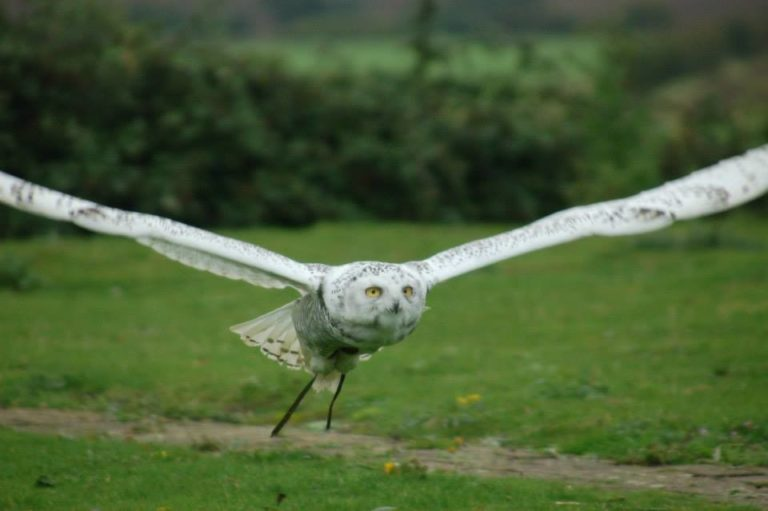 Child-friendly day out at the raptor foundation