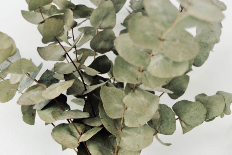 sauna whisks eucalyptus